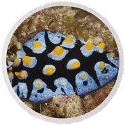 Nudibranch Feeding On Algae, Papua New Round Beach Towel