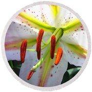 Oriental Lily Hybrid Named Mojave Round Beach Towel