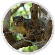 Out On A Branch Round Beach Towel