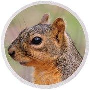 Pine Squirrel Round Beach Towel
