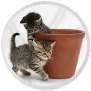 Playful Kittens Round Beach Towel