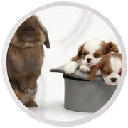Rabbit And Spaniel Pups Round Beach Towel