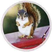 Red Squirrel On Railing Round Beach Towel