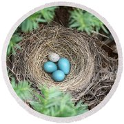Robins Nest And Cowbird Egg Round Beach Towel