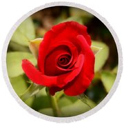 Rose Red Round Beach Towel