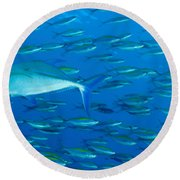 School Of Wide-band Fusilier Fish Round Beach Towel