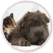 Shar Pei Puppy And Tortoiseshell Kitten Round Beach Towel