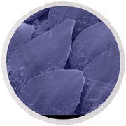 Shark Skin, Sem Round Beach Towel