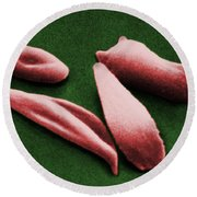 Sickle Red Blood Cells Round Beach Towel by Omikron