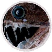 Sloanes Viperfish Round Beach Towel