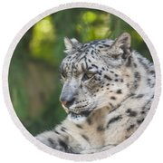 Snow Leopard Round Beach Towel