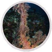 Soft Coral Seascape, Indonesia Round Beach Towel