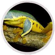 Splendid Leaf Frog Round Beach Towel