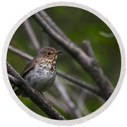 Swainsons Thrush Round Beach Towel