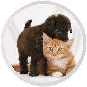 Toy Poodle Puppy With Kitten Round Beach Towel