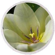 Tulip Named Perles De Printemp Round Beach Towel