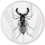 Whipscorpion X-ray Round Beach Towel
