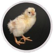 White Leghorn Chick Round Beach Towel