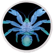 X-ray Of Coconut Crab Round Beach Towel