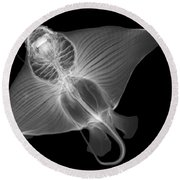 X-ray Of Cownose Ray Round Beach Towel