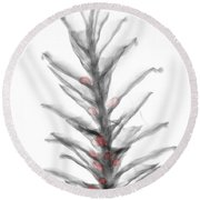 X-ray Of Pinecone With Seeds Round Beach Towel