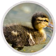 Young Duck Round Beach Towel