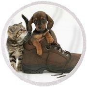 Kitten And Puppy Round Beach Towel by Jane Burton