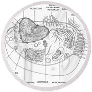 Animal Cell Diagram Round Beach Towel