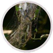 Bird-cherry Ermine Caterpillars Round Beach Towel