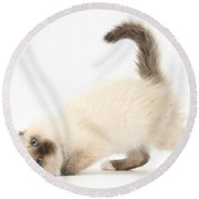 Birman-cross Kitten Round Beach Towel