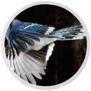 Blue Jay In Flight Round Beach Towel