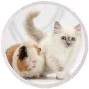 Blue-point Kitten And Guinea Pig Round Beach Towel