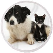 Border Collie And Tuxedo Kitten Round Beach Towel