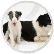 Border Collies Round Beach Towel