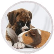 Boxer Puppy And Guinea Pig Round Beach Towel by Mark Taylor