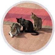 3 Cats Looking Pensive Round Beach Towel