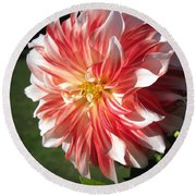 Dahlia Named Myrtle's Brandy Round Beach Towel