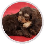 Doxie-doodle Puppies Round Beach Towel