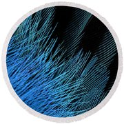 Eastern Bluebird Feathers Round Beach Towel