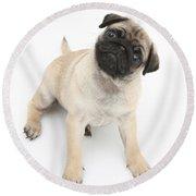 Fawn Pug Pup Round Beach Towel