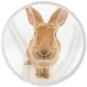 Flemish Giant Rabbit Round Beach Towel