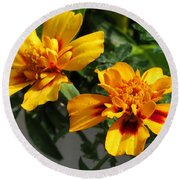 French Marigold Named Starfire Round Beach Towel