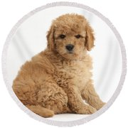 Goldendoodle Puppy Round Beach Towel