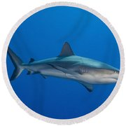 Gray Reef Shark, Kimbe Bay, Papua New Round Beach Towel by Steve Jones