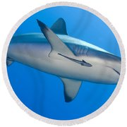 Gray Reef Shark With Remora, Papua New Round Beach Towel