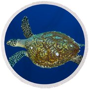 Hawksbill Sea Turtle, Kimbe Bay, Papua Round Beach Towel