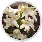 Hyacinth Named Aiolos Round Beach Towel