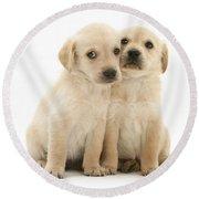 Labrador Retriever Puppies Round Beach Towel