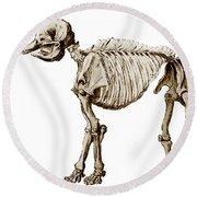Mastodon Skeleton Round Beach Towel by Science Source
