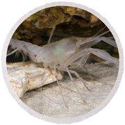 Mclanes Cave Crayfish Round Beach Towel
